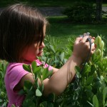 Our Flower Garden: A Child's Perspective