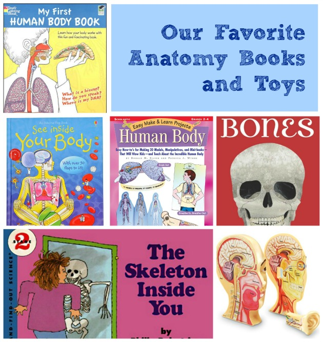 Anatomy for Kids: Teaching from the inside out