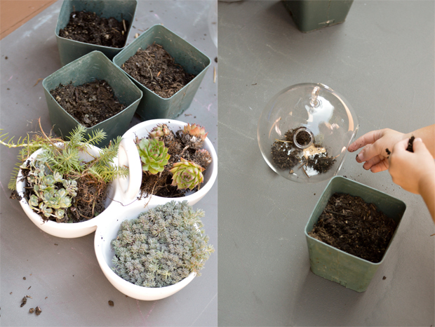 Playful Learning: Simple Terrariums