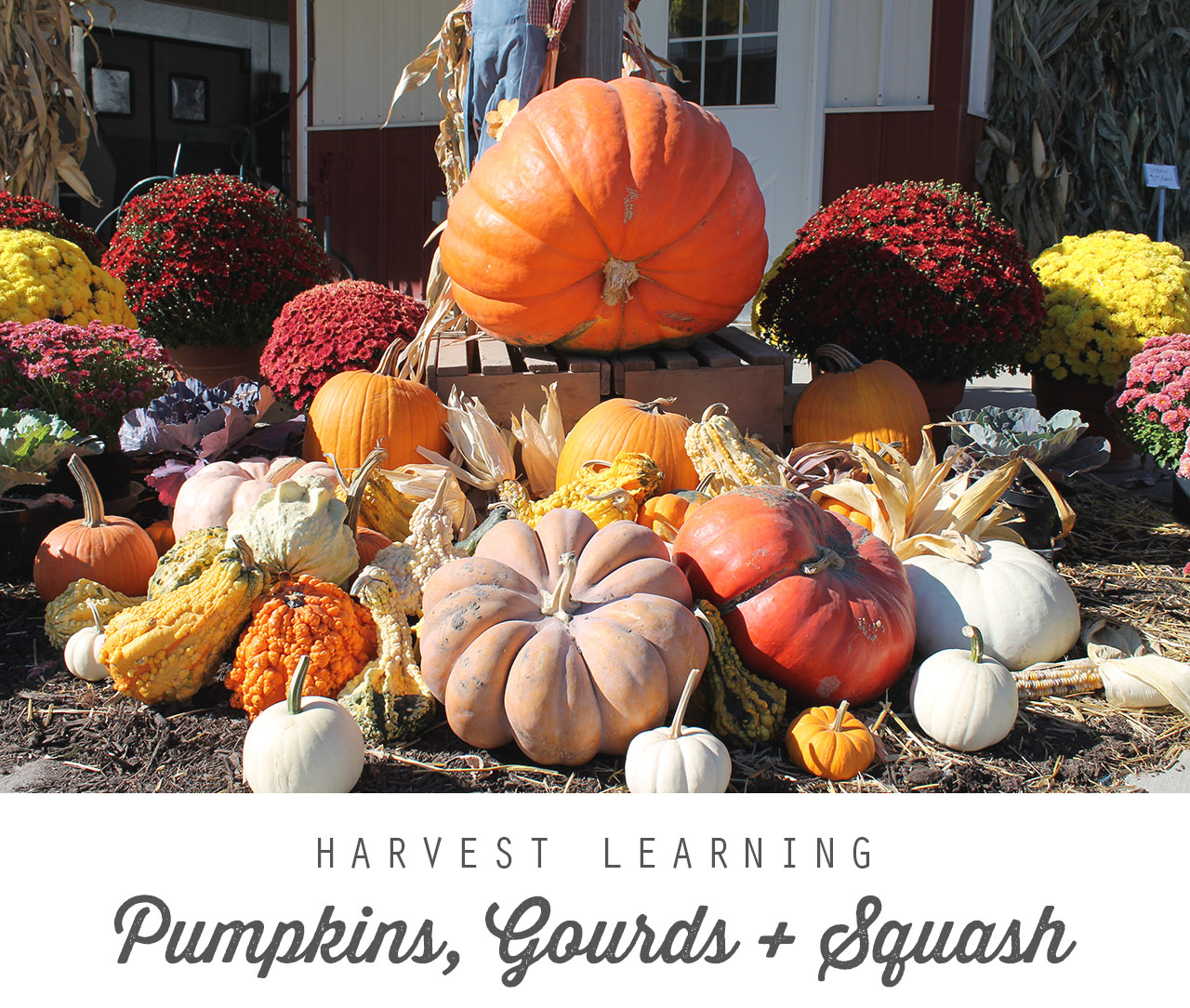 Harvest Learning: Pumpkins, Gourds, and Squash