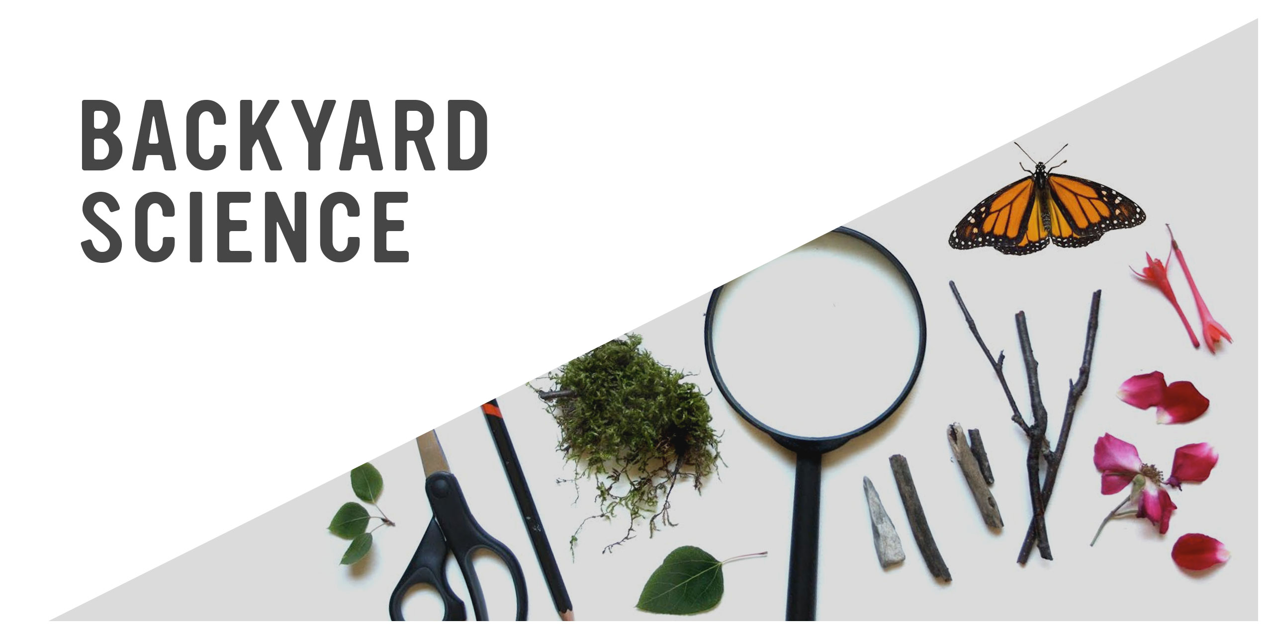 Online Class: Backyard Science Investigtaions