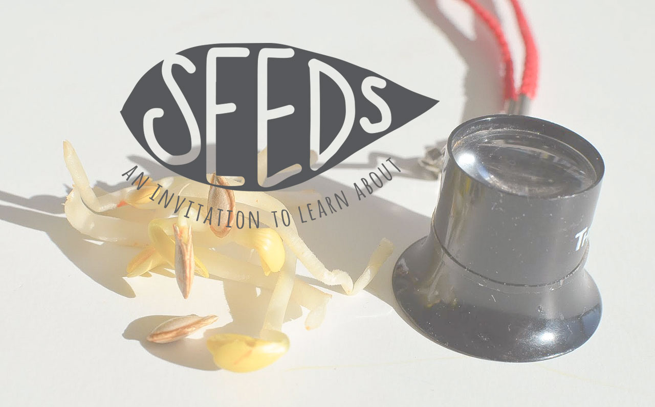 An Invitation To Learn About Seeds