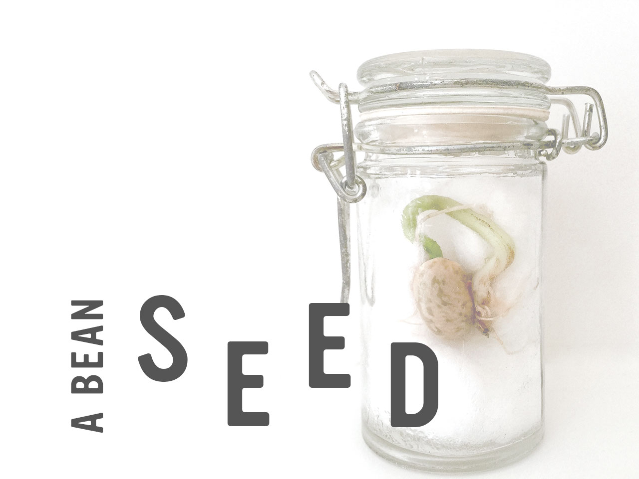 Playful Learning: Life Cycle of a Seed