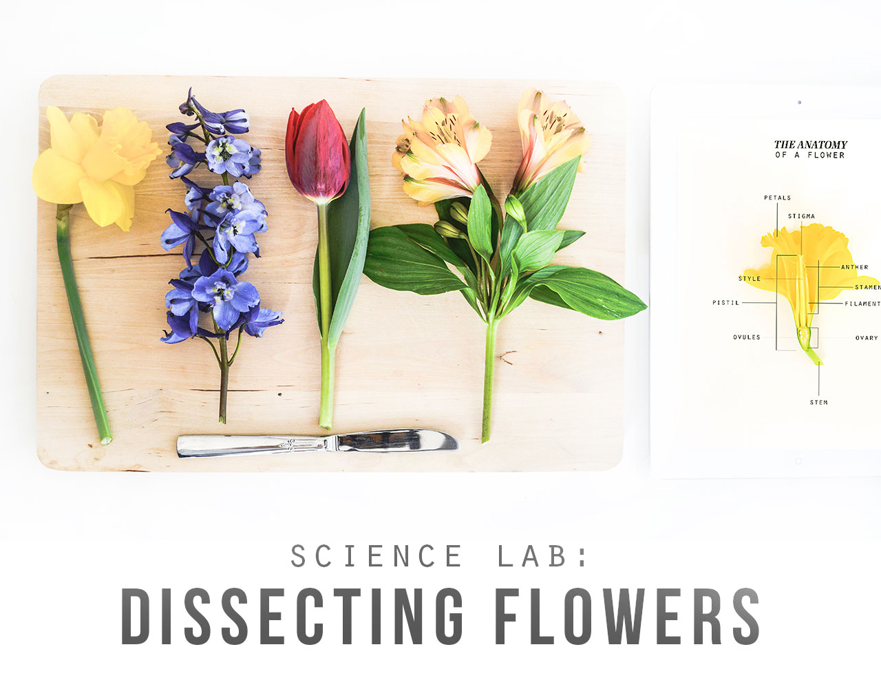 Playful Learning: Dissecting Flowers