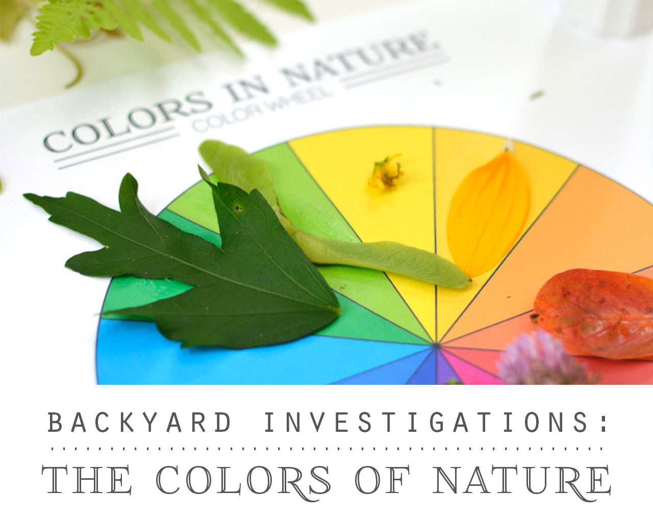 Backyard Investigations: The Colors of Nature