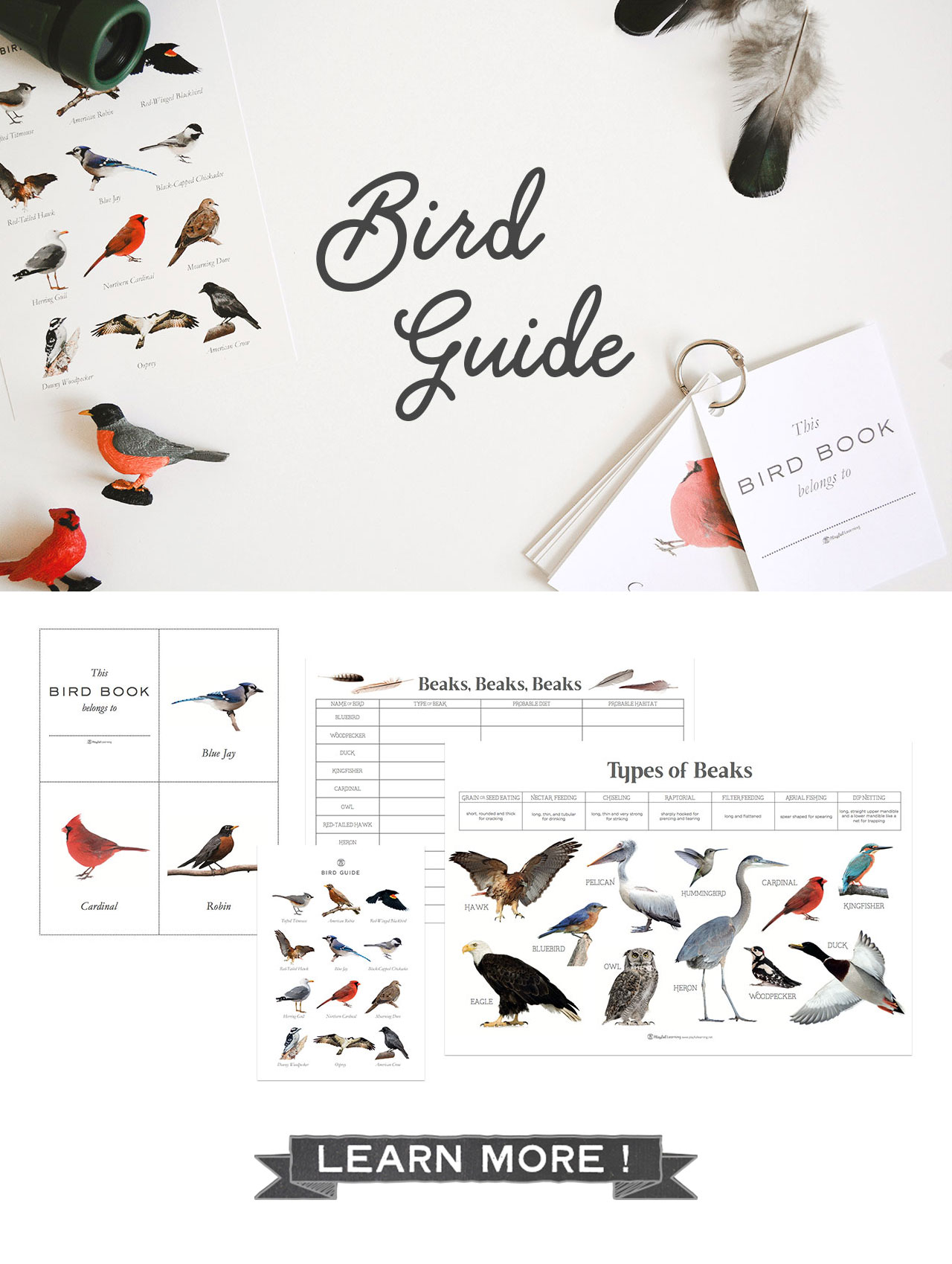 Playful Learning: Bird Guide