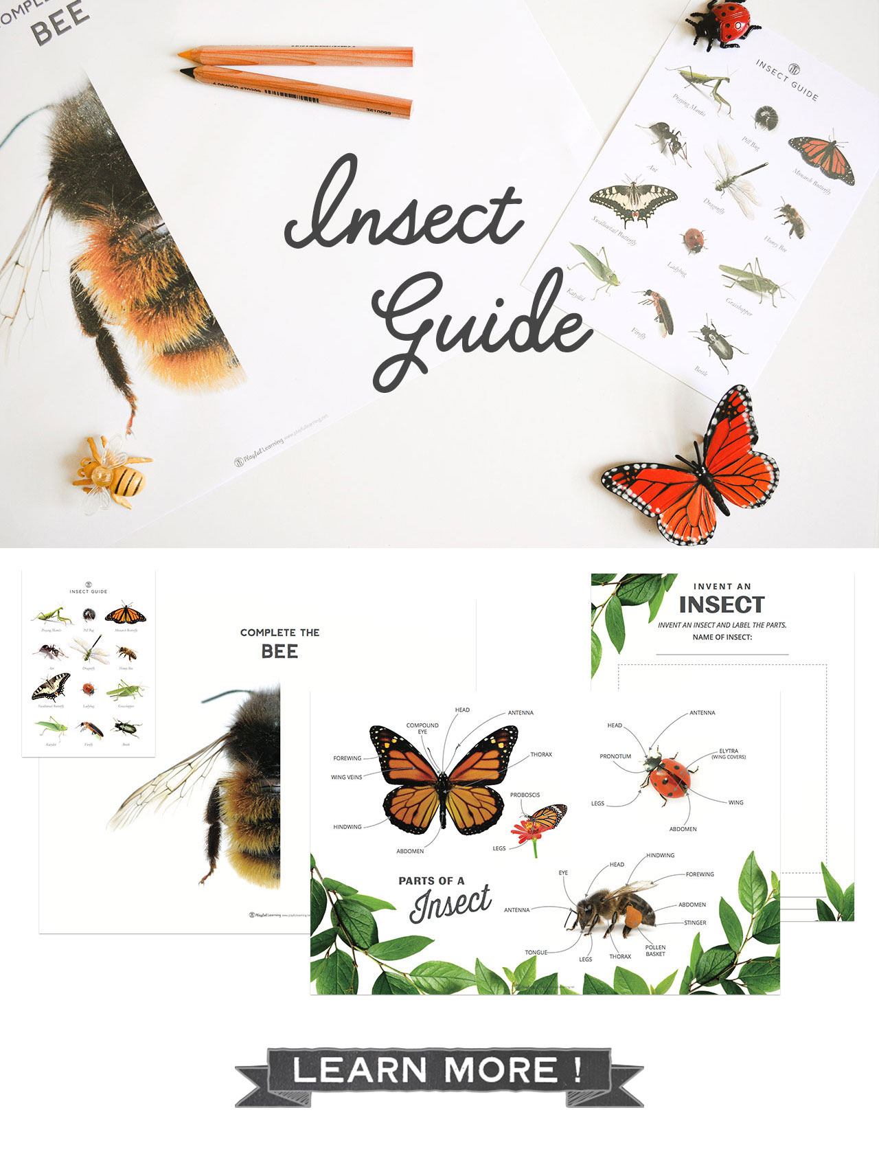 Playful Learning: Insect Guide