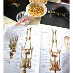 Dem Bones: Learning About the Human Skeleton
