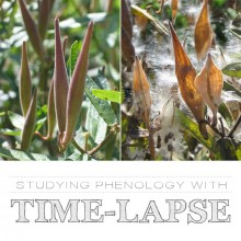 Studying Phenology with Time-Lapse