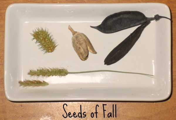 The Seeds of Fall