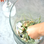Making a New Home & Learning About Air Plants